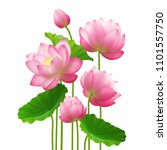 bunch of beautiful lotus... | Shutterstock .eps vector #1101557750