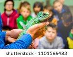 man holds  green  beautiful... | Shutterstock . vector #1101566483