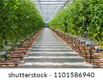 wide corridor in a large dutch...   Shutterstock . vector #1101586940