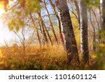 sunset forest scenery. abstract ... | Shutterstock . vector #1101601124