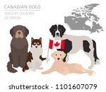 dogs by country of origin.... | Shutterstock .eps vector #1101607079