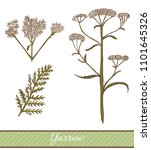 colored yarrow in hand drawn... | Shutterstock .eps vector #1101645326