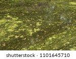 netherlands  heemstede. forest... | Shutterstock . vector #1101645710