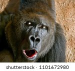 portrait of a close up of male... | Shutterstock . vector #1101672980