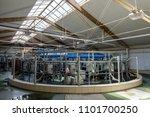 robotic milking rotary system... | Shutterstock . vector #1101700250