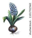 hyacinth spring flower  | Shutterstock . vector #1101702560