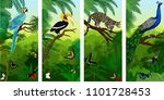 Vectorset Of Jungle Rainforest...
