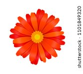 bright colourful red gerbera... | Shutterstock .eps vector #1101849320