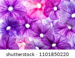 background from flower petals   ... | Shutterstock . vector #1101850220