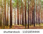 spring pine forest | Shutterstock . vector #1101854444