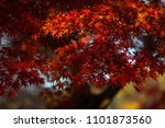 autumn is one of the most... | Shutterstock . vector #1101873560