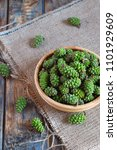 Young Green Pine Cones For...