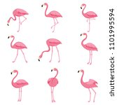cartoon pink flamingo set. cute ... | Shutterstock . vector #1101995594