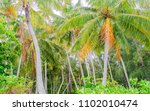 tropical forest in moorea  one... | Shutterstock . vector #1102010474