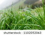 Grass With Dew On The Blurred...