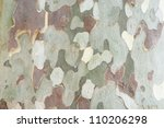 Bark Of Platan Tree
