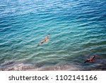 sea eagles. kites over indian... | Shutterstock . vector #1102141166