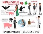 nipah virus  niv  infographics... | Shutterstock .eps vector #1102158449