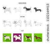 dog breeds flat outline...   Shutterstock .eps vector #1102164413