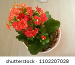 home decorative potted plant  ...   Shutterstock . vector #1102207028