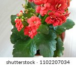 home decorative potted plant  ...   Shutterstock . vector #1102207034
