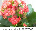 home decorative potted plant  ...   Shutterstock . vector #1102207040