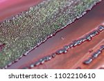 colony characteristics of... | Shutterstock . vector #1102210610