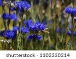 close up beautiful violet... | Shutterstock . vector #1102330214