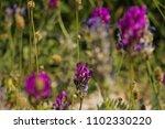 close up beautiful violet... | Shutterstock . vector #1102330220