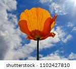 california poppy screen saver | Shutterstock . vector #1102427810