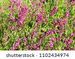 close up of a little violet...   Shutterstock . vector #1102434974