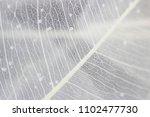 macro structure white delicate... | Shutterstock . vector #1102477730