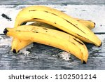 group of plantain banana on the ... | Shutterstock . vector #1102501214