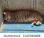 Striped Street Cat Sleeps On A...