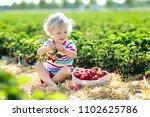 child picking strawberry on... | Shutterstock . vector #1102625786
