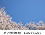 kyoto in japan  cherry blossoms ... | Shutterstock . vector #1102641293