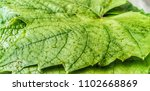 large green leaf close up with... | Shutterstock . vector #1102668869