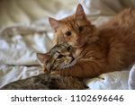 friendship of the two  cats ... | Shutterstock . vector #1102696646