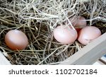rice straw and chicken eggs in...   Shutterstock . vector #1102702184