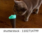 grey cat sniffing and eating... | Shutterstock . vector #1102714799