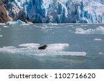 sawyer glacier cruise   Shutterstock . vector #1102716620