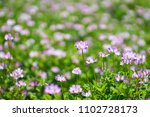 a japanese lentil farm         ... | Shutterstock . vector #1102728173