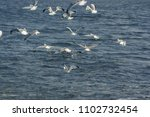 gulls above the river | Shutterstock . vector #1102732454