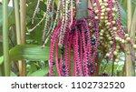 palm tree pods | Shutterstock . vector #1102732520