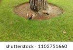 wild egyptian geese | Shutterstock . vector #1102751660