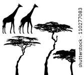 African Animals  Giraffe ...