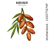 dates with with palm leaves and ... | Shutterstock . vector #1102776749