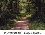narrow forest path with light... | Shutterstock . vector #1102856060