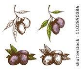 vintage engrave style... | Shutterstock .eps vector #1102890386