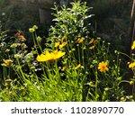 close up yellow garden flowers... | Shutterstock . vector #1102890770